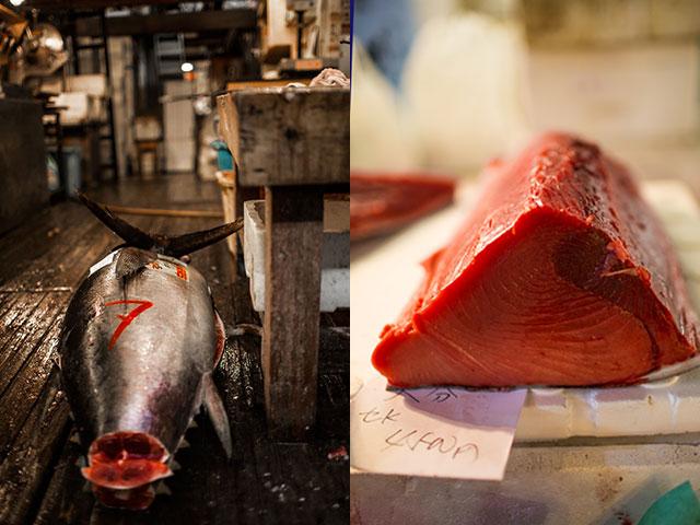 Tuńczyki już wylicytowane przez kupców z całego świata